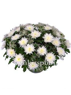 Корзина из белых хризантем