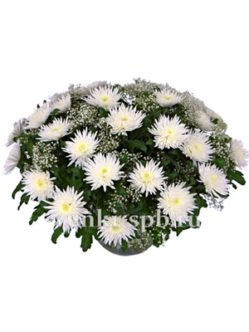 Кирзина из белых хризантем