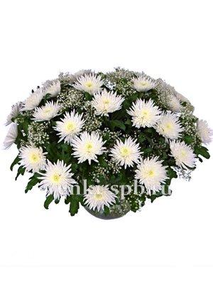 Корзина из белой хризантемы - Фото 1 | Компания «Венок»