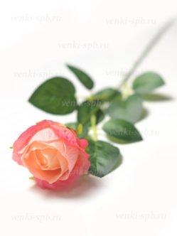 Бутон розы Битондо на кладбище в СПб