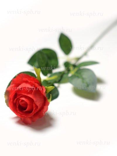 Бутон розы Битондо - Фото 1 | Компания «Венок»
