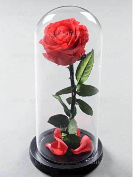 Алая роза в колбе 25 см - Фото 1 | Компания «Венок»