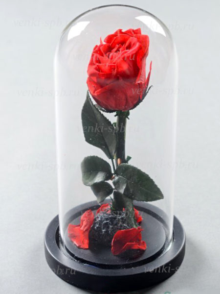 Роза в колбе 22 см — красная - Фото 1 | Компания «Венок»
