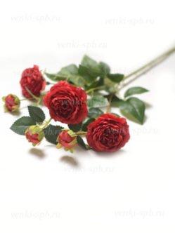 Алые розы Ранко купить с доставкой по СПб